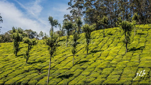THE VALLEY - MUNNAR-32