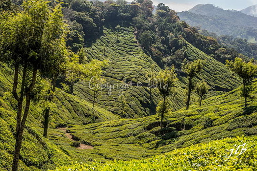 THE VALLEY - MUNNAR-33