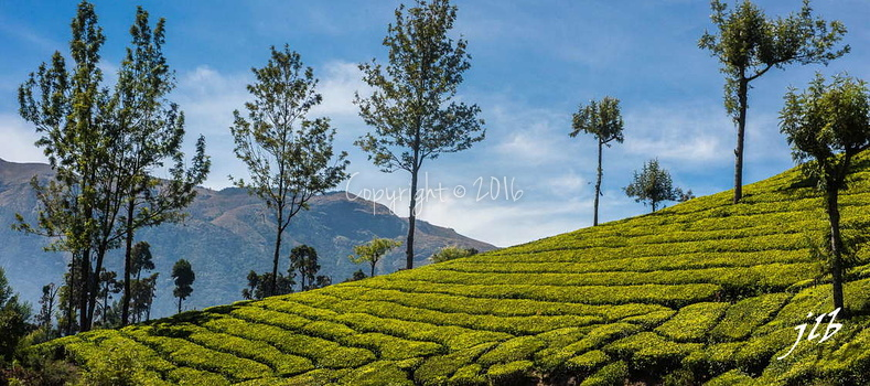 THE VALLEY - MUNNAR-34