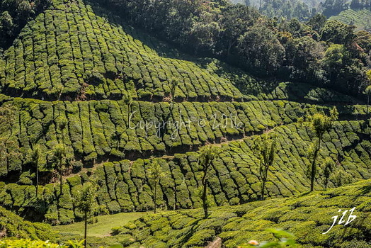 THE VALLEY - MUNNAR-35