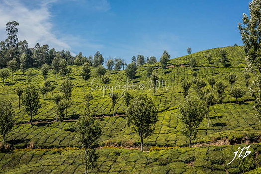 THE VALLEY - MUNNAR-36