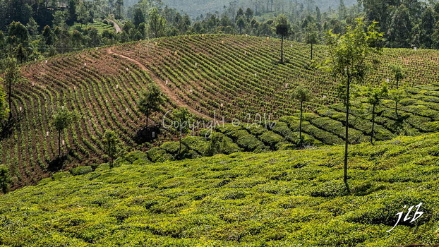 THE VALLEY - MUNNAR-37