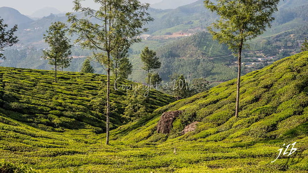 THE VALLEY - MUNNAR-38