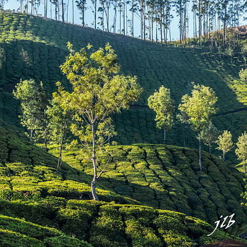 THE VALLEY - MUNNAR-40