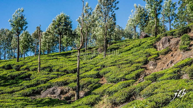 THE VALLEY - MUNNAR-41