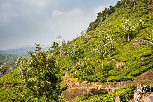 THE VALLEY - MUNNAR-42