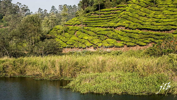 THE VALLEY - MUNNAR-44