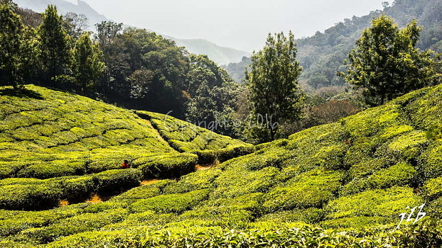 THE VALLEY - MUNNAR-45