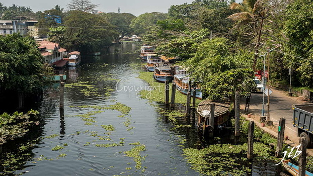Le GRAND CANAL  - ALLEPPEY -13